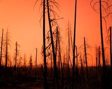 Red Sunset Forest Fire Damage Kuvituskuvat
