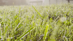 MACRO: Beautiful morning dew on grass glittering in sunshine - stock footage