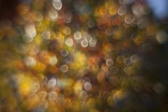 Autumn colored maple leaves out of focus Stock Photos