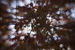 Autumn rowan leaves out of focus - stock photo