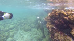 Free divers filming a Galapagos Sea Lion underwater at Champion Island off - stock footage
