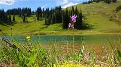 Flowers meadow in Image lake,Washington,USA Stock Footage