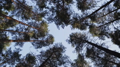 Rotating Tall Tree Crowns In The Pine Forest Stock Footage