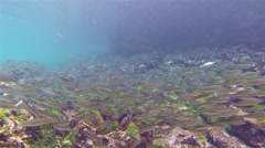 Underwater footage of a Hieroglyphic hawkfish and snorkelers at Sombero Chino on - stock footage