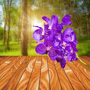 Violet orchid flower on wood plank with colorful blur nature background - stock illustration