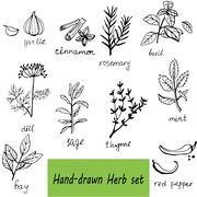 Vector background hand drawn herbs and spices set - stock illustration