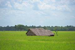 Farm house among rice fields in Myanmar Stock Photos