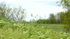 Green nature steppe herbs background Stock Footage