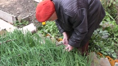 Elderly woman cuts green onions Stock Footage