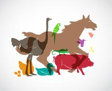 Vector animal group on white background, horse,pig,chicken,parrot,duck,butter - stock illustration