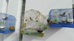 Three Birdcage on a wall near a seaside in Greece Stock Footage