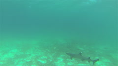 White-tipped shark POV swimming off Santiago Island in Galapagos National Park, Stock Footage