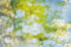 Stock Photo of Spring sweet color light bokeh and white cloud blur
