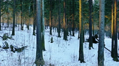 Woman Walks Through Winter Forest in a Sunny Day Stock Footage