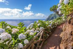 Coastal path with ortensia in Sao Miguel, Azores Islands Stock Photos