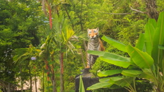 Big model of tiger among green plants in park in Vietnam Stock Footage