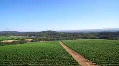 An aerial over vineyards in Northern California's Sonoma County. - stock footage