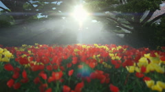 Magic forest with colorful tulips, sun shinning through trees, tilt Stock Footage