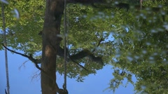 Stock Video Footage of Treetop reflection in rippled pond water