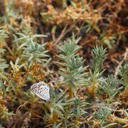 A butterfly and ecdysis shell of other insect on the plant, in late autumn - stock photo