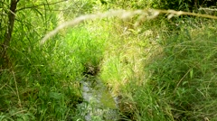 Rivulet flows in the magic forest - beautiful landscape - grassland Stock Footage