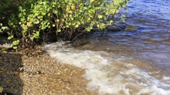 Surf the waves and shine water against bushes Stock Footage