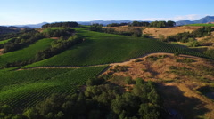 A high aerial over rows of vineyards in Northern California's Sonoma County. - stock footage