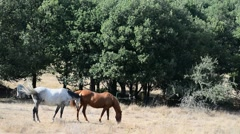 White and brown horses Stock Footage