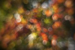Autumn colored maple leaves in bubbles - stock photo