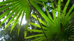 Stock Video Footage of Nature lush green plant leaf foliage in forest sunlight