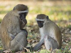 Monkeys in the park Stock Photos