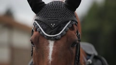 Slow motion shot of a horse's head Stock Footage