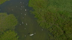AERIAL, flying over birds in the lake, SLOW Motion Stock Footage
