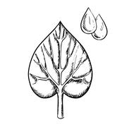 Heart shaped sappy leaf and water drops - stock illustration