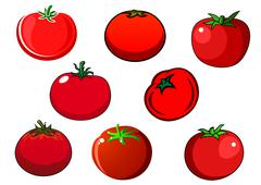 Fresh red isolated tomato vegetables Stock Illustration