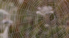 Spider web with dew drops in the morning - stock footage