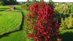 Unique Aerial Perspective of Fall Colors, Maple Tree in Wind Stock Footage