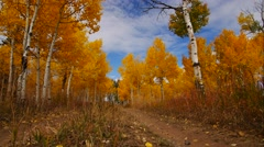 Fall Time Lapse With Aspen Trees - stock footage