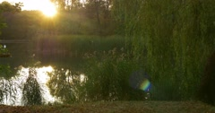 Stock Video Footage of Forest Lake Sunset Sun is Sitting Behind The Trees at Opposite Bank Willow Tree