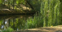 Pond Lake Calm Water Reflection On The Water Surface Green Trees Park Area Stock Footage