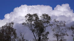 Thunderhead clouds form behind trees as a storm approaches in this time lapse Stock Footage
