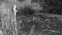 Pond water grass Stock Footage