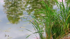Pond water grass - stock footage
