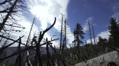 Dead trees stand as silhouettes background with white clouds in blue sky Stock Footage