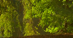 Lit Trees Fresh Green Trees Sun Shines Rippling Water Slope at the River Water Stock Footage