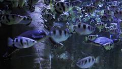 Fishes Aquarium Stock Footage
