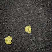 Fallen autumn leaves on pure asphalt Stock Photos