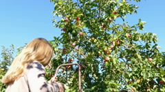 A woman rises on a ladder and reap apples Stock Footage