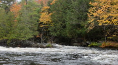 Colorful autumn forest on a riverside of Oxtongue river Stock Footage