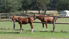 Horses rest and eat in a horseriding equestrian club school Stock Footage
